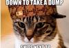 Scumbag <b>cat</b>